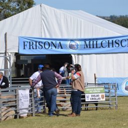 Expo Melilla 2017 - Dia 5 (31)