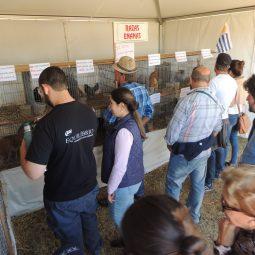 Expo Melilla 2017 - Dia 5 (70)