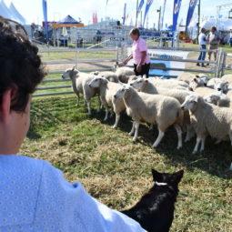Día 1 - Expo Melilla 2018 (109)