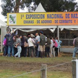 Fotos dia 3 - Expo Melilla 2016 (79)