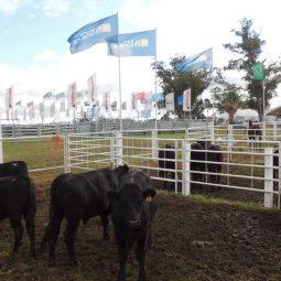 Fotos dia 4 - Expo Melilla 2016 (83)