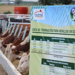 Expo Melilla 2017 - Día 1 (7)