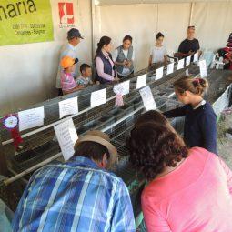 Expo Melilla 2017 - Dia 5 (69)