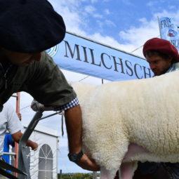 Día 2 - Expo Melilla 2018_095