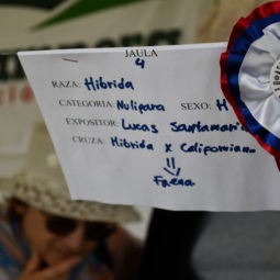Día 4 - Expo Melilla 2018_073