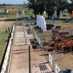 Expo Melilla 2019 - Día 3 (12)