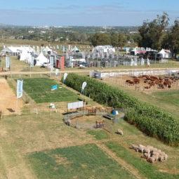Expo Melilla 2019 - Día 3 (6)